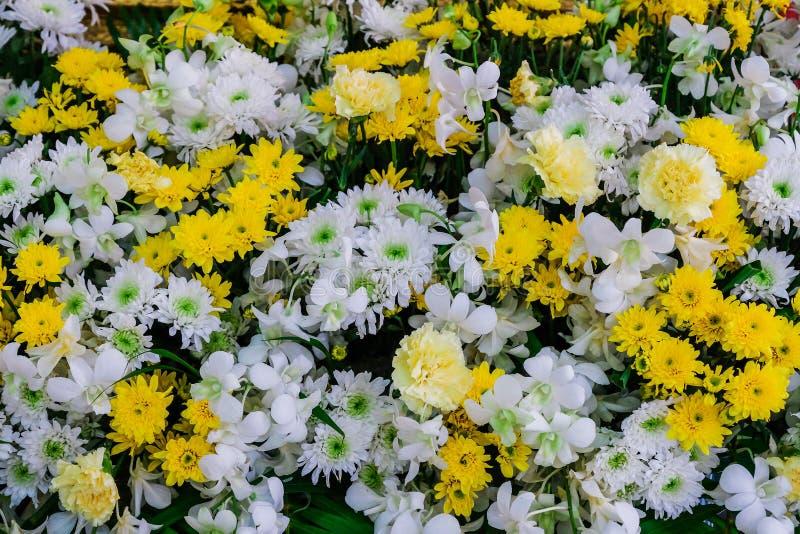 Piękny kwiatu tło dla dekorować ślubne sceny w białych żółtych brzmieniach zdjęcie royalty free