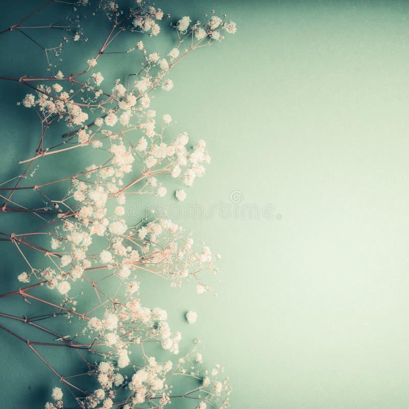 Piękny kwiecisty kartka z pozdrowieniami z małą białą łyszczec kwitnie na turkusowym tle, dosyć kwiecista granica obrazy stock