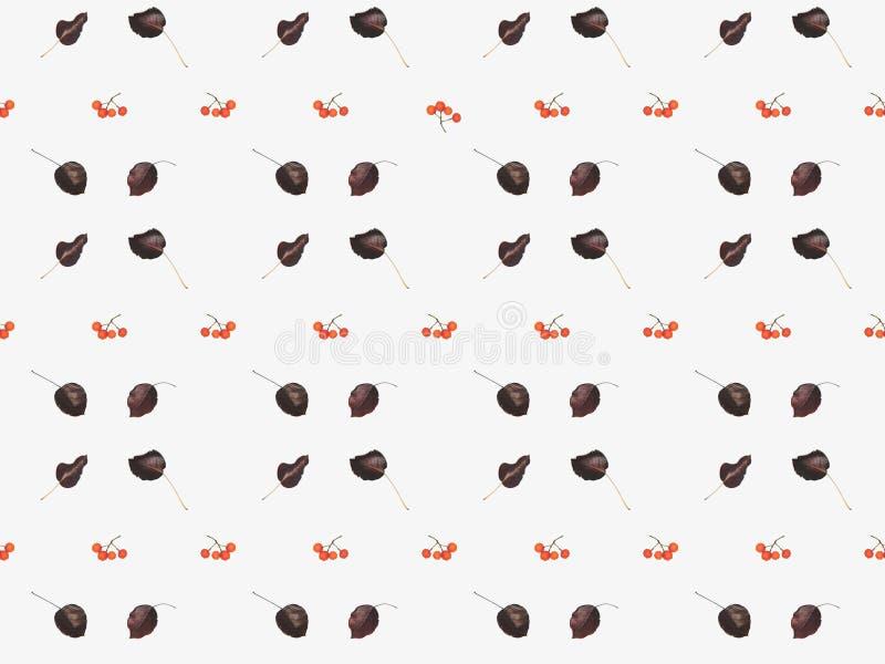 piękny kwiecisty wzór od wysuszonych jesień liści, jagod i ilustracji