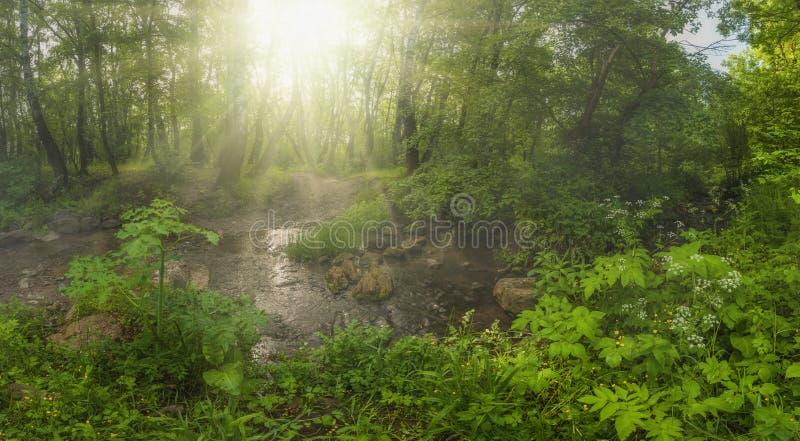 piękny las zdjęcia stock