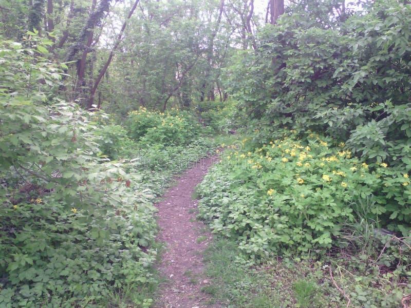 piękny las zdjęcie stock