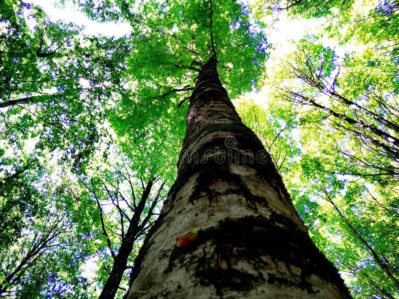 Piękny las dęby zdjęcia stock