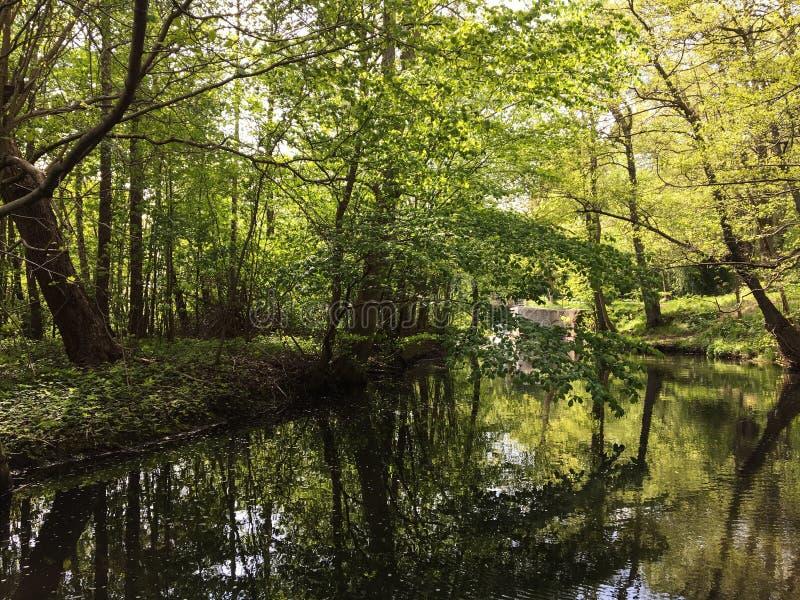 Piękny las z światłem słonecznym w Dani blisko Kopenhaga zdjęcia royalty free