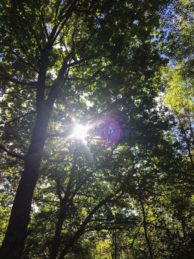Piękny las z magicznym światłem słonecznym fotografia stock