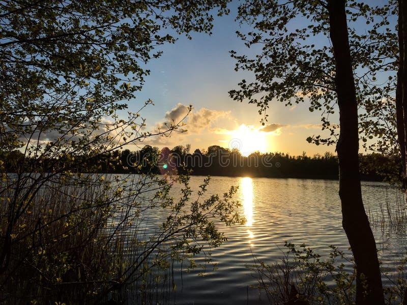 Piękny las z magicznym światłem słonecznym fotografia royalty free