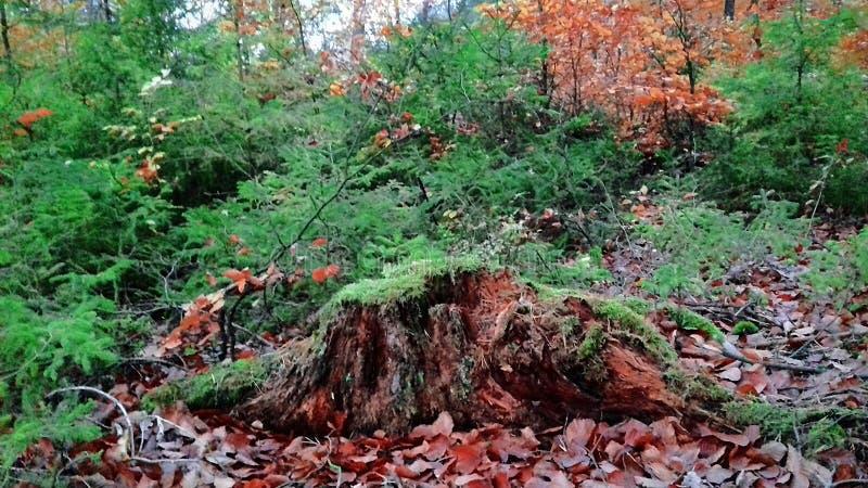 Piękny lasowy Piękny krajobraz Lasowa natura Jesieni natura w ranku Lasowi spacery obrazy royalty free