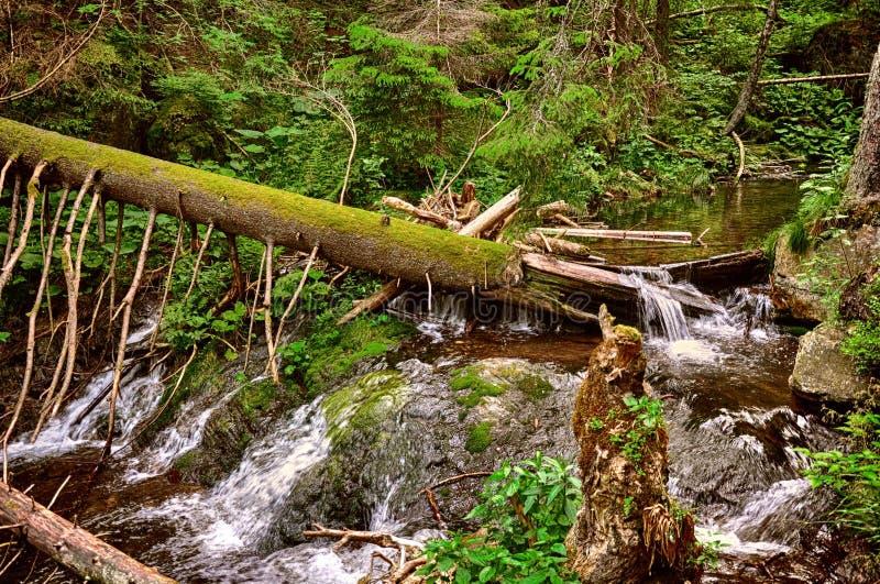 Piękny lasu krajobraz z dziką rzeką zdjęcie royalty free