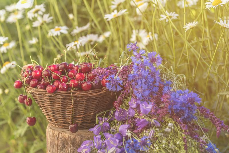 Piękny lata tło z wiśniami i kwiatami Światło słoneczne, obraz royalty free
