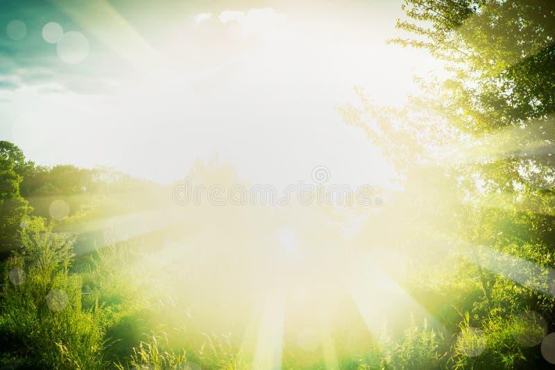 Piękny lata tło z zielonej trawy, ulistnienia i słońca promieniami, zdjęcie stock