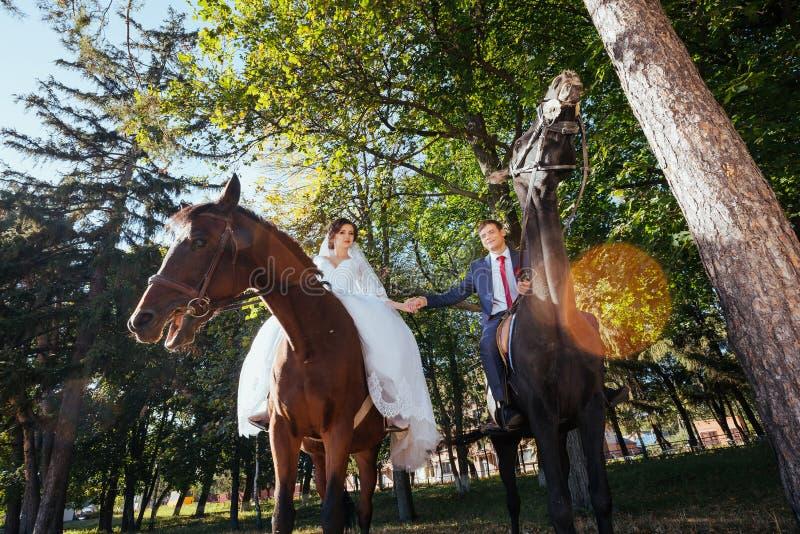 Piękny lato ślubu spacer na naturze fotografia royalty free