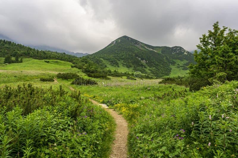 Piękny lato krajobraz w Belianske Tatry górach Slo fotografia royalty free
