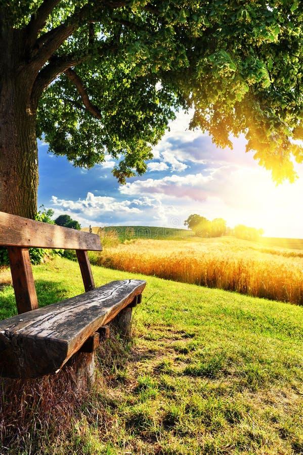 Piękny lato krajobraz z drewnianą ławką zdjęcia stock