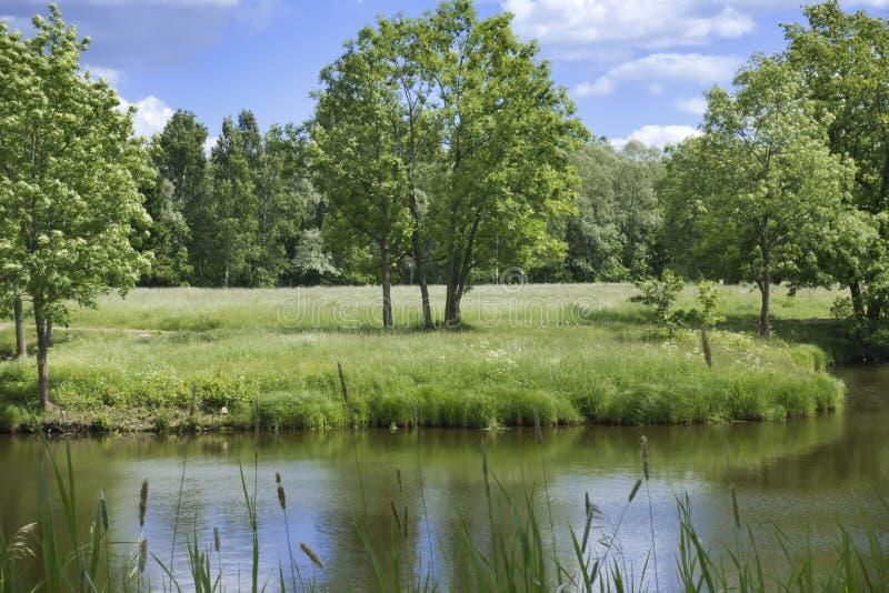 Piękny lato krajobraz z drzewami na brzeg rzeki, łące i drewnie na horyzoncie, fotografia royalty free