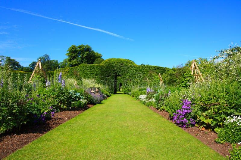 Piękny lato ogród zdjęcie royalty free
