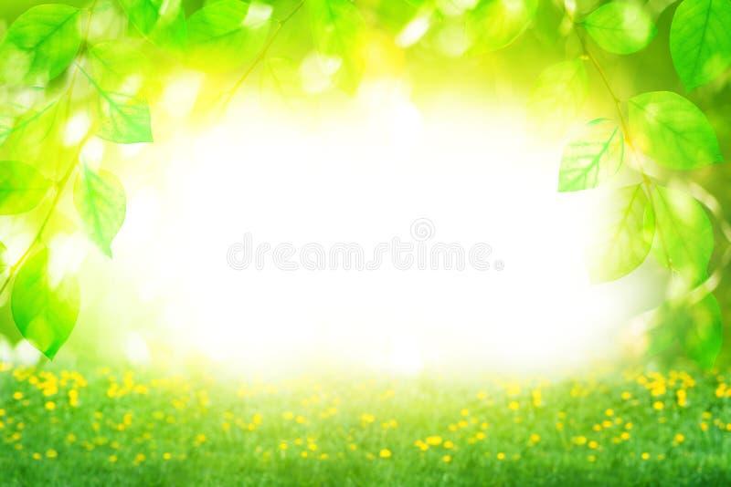 Piękny lato słonecznego dnia krajobraz, zieleń opuszcza gałąź i kwiatu pole na jaskrawym zamazanym bokeh tle zamkniętym w górę fotografia royalty free
