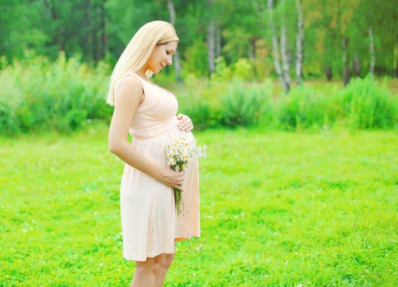 Piękny młody kobieta w ciąży z chamomiles kwitnie w lecie fotografia royalty free