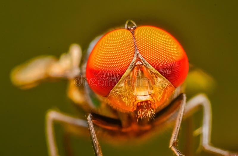 Piękny mały insekt na roślinie w Malaysia obrazy stock