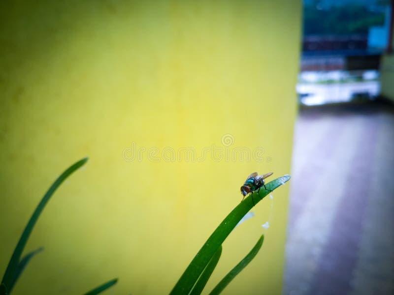Piękny mały insekt na trawie fotografia royalty free