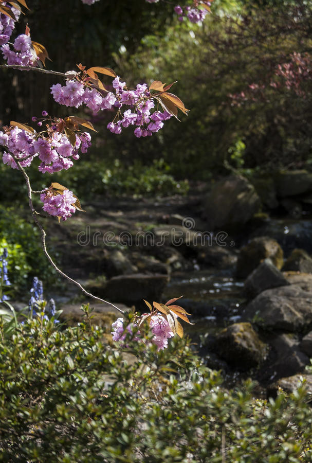 Piękny mały japanise ogród w Keukenhof, Holandia obraz royalty free