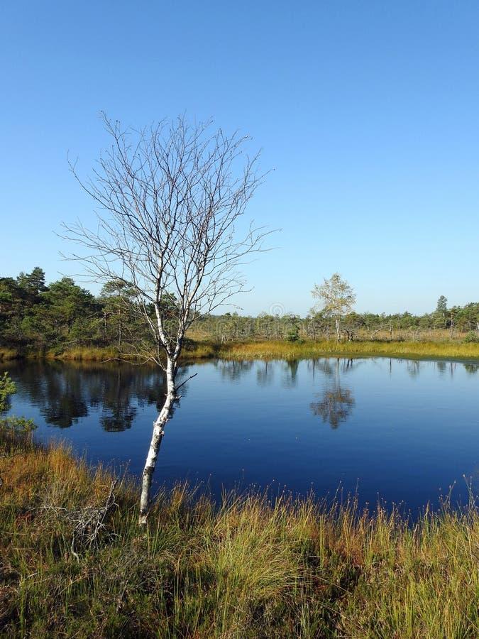 Piękny mały jezioro, drzewa i rośliny w Aukstumalos, zalewamy, Lithuania obraz royalty free