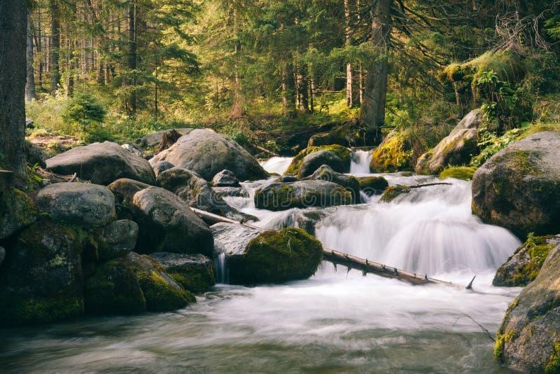 Piękny mały waterful w zielonym małym lesie obraz stock