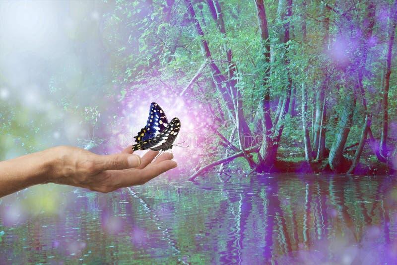 Piękny Magiczny Iskrzasty Motyli uwolnienie zdjęcie stock