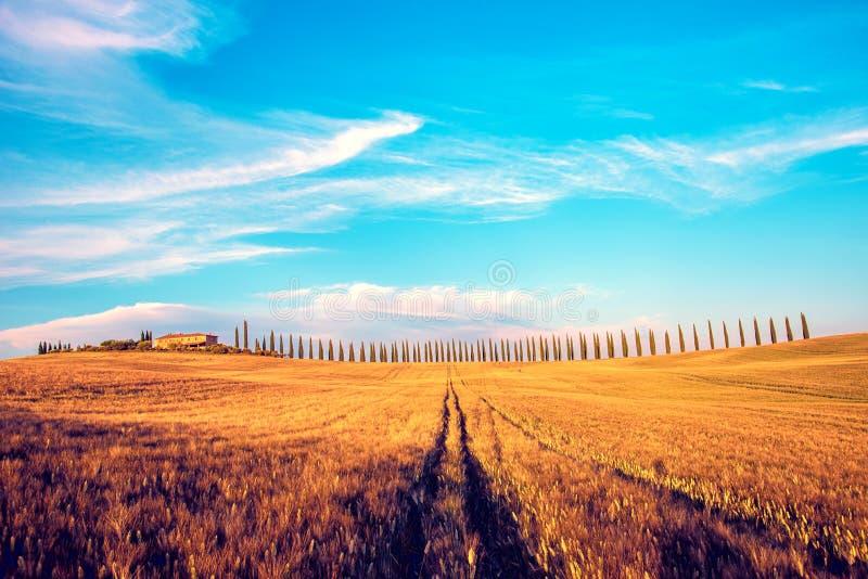 Piękny magiczny krajobraz z polem i linia cyprys w Tuscany, Włochy przy wschód słońca obrazy royalty free
