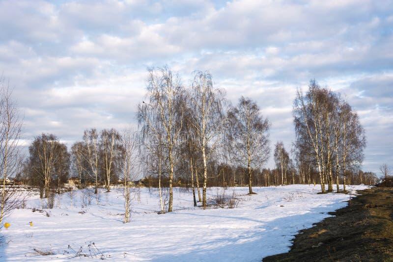 Piękny Marzec krajobraz z brzozami w promieniach położenia słońce obraz royalty free