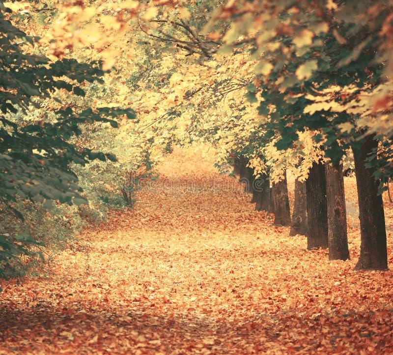 Piękny marzycielski jesień las z walkiing ścieżką zdjęcie royalty free