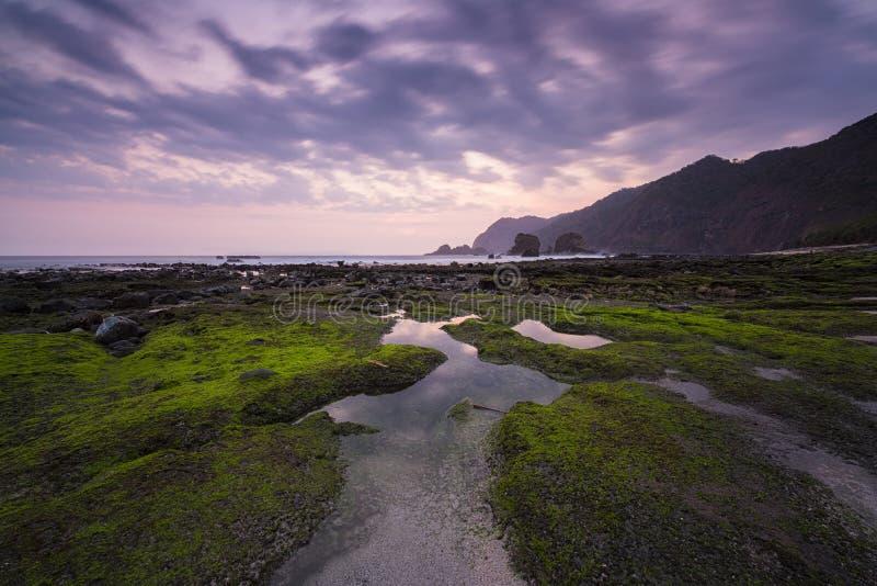 Piękny mech na plaży Tanjung Papuma podczas zmierzchu przy Wschodnim Jawa, Indonezja obrazy stock