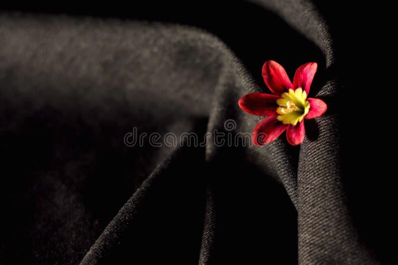 Piękny menchia kwiat zawijający w popielatym tle obraz royalty free