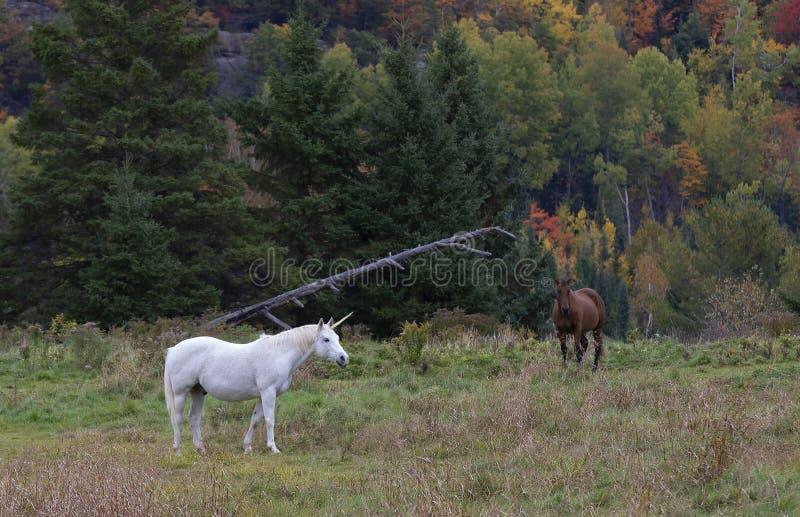 Piękny mityczny jednorożec pasanie w trawiastym polu na gospodarstwie rolnym w Kanada w jesieni zdjęcie royalty free