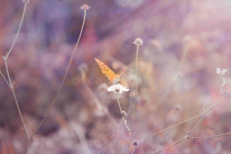 Piękny motyl na ostrzu trawa w lesie bajecznie tonowanie i miękka ostrość obraz royalty free