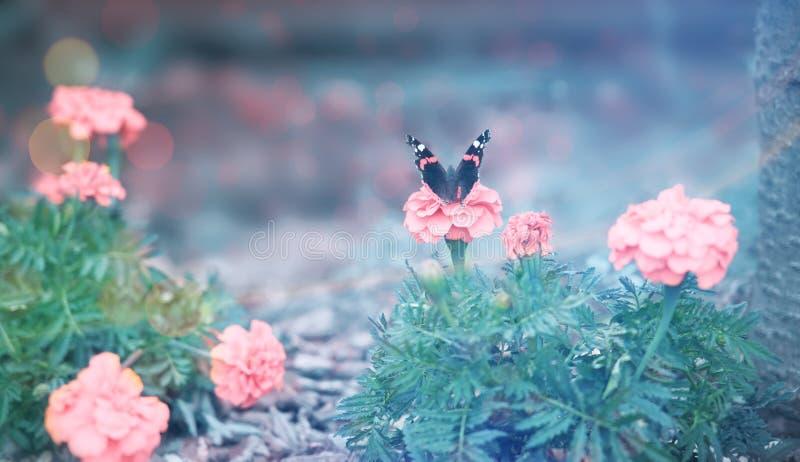 Piękny motyl na różowym kwiacie obraz royalty free