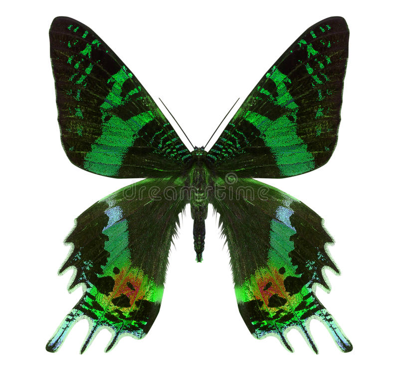 Piękny motyl odizolowywający na bielu fotografia stock