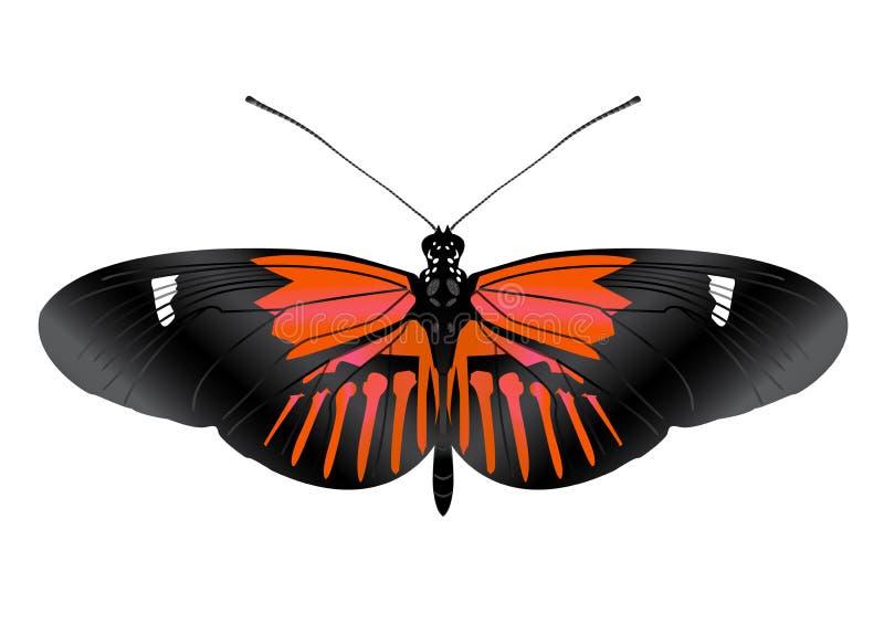 Piękny motyl z otwartymi skrzydłami obrazy royalty free