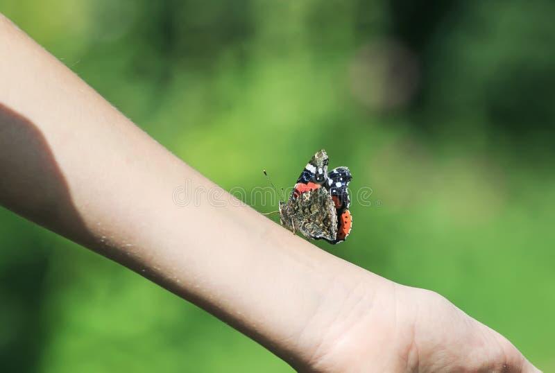Piękny motyli Admiral czołganie na ręki dziewczynie w lecie Gard zdjęcia stock