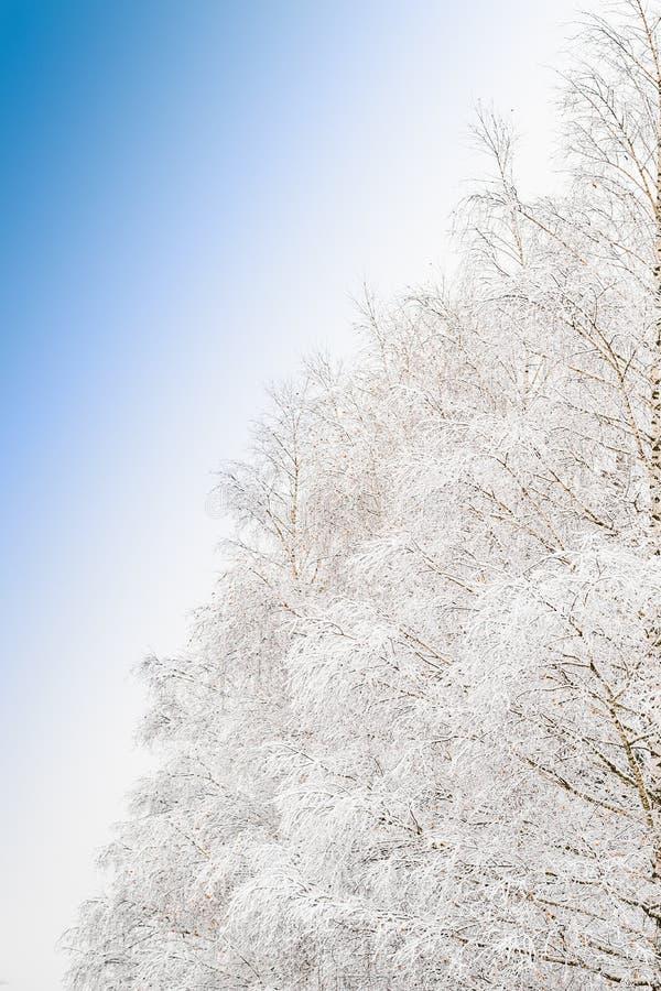 Piękny mroźny ranku widok z zamarzniętymi gałąź śnieżny drzewo zdjęcie royalty free