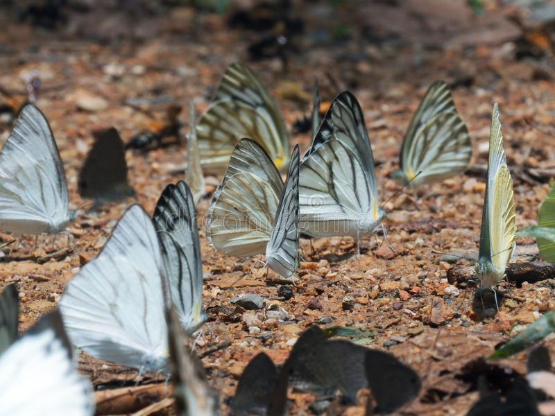 Piękny na motylu z plamy tłem obraz royalty free