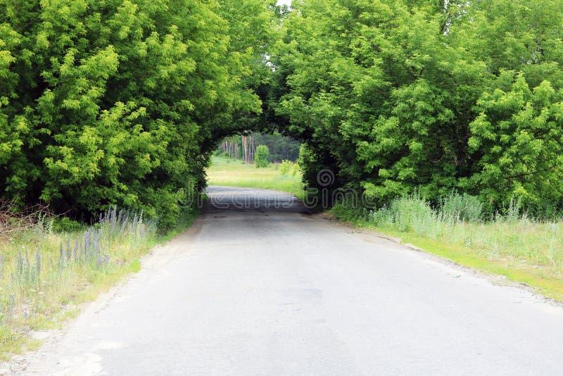 Piękny naturalny łuk, jednakowy tunel, nad wiejską drogą w lecie podczas podróży fotografia stock
