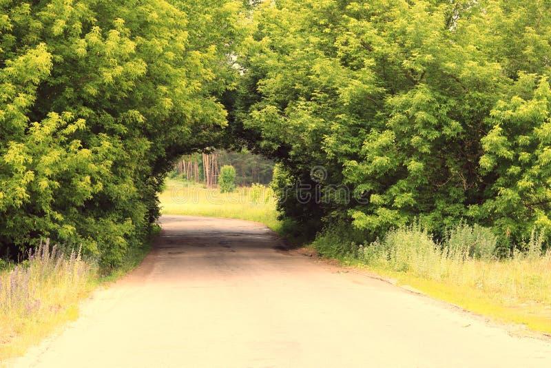 Piękny naturalny łuk, jednakowy tunel zdjęcia stock