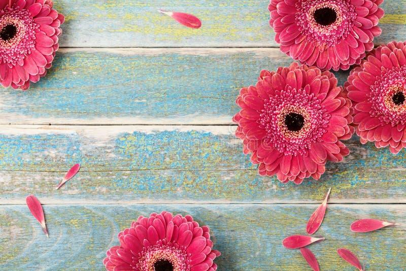 Piękny naturalny gerbera stokrotki kwiatu kartka z pozdrowieniami dla matki lub kobiety dnia tła Odgórny widok ilustracyjny lelui obraz stock