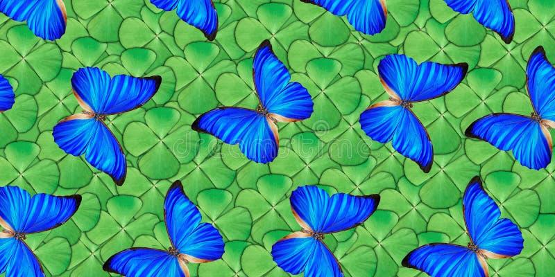 Piękny naturalny tło z mnóstwo wibrującymi błękitnymi butterflys lata nad cztery liści koniczyną Fotografia kola?u sztuki praca royalty ilustracja