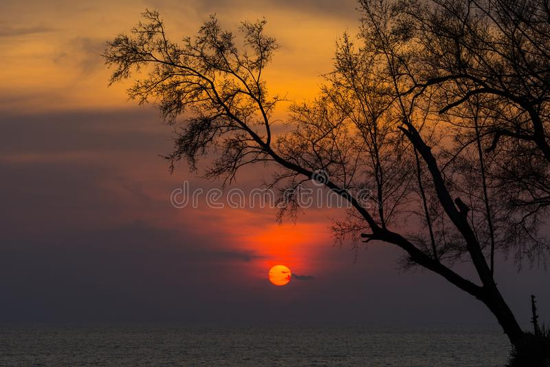 Piękny naturalny zmierzch nad morzem z sylwetką drzewo obraz royalty free