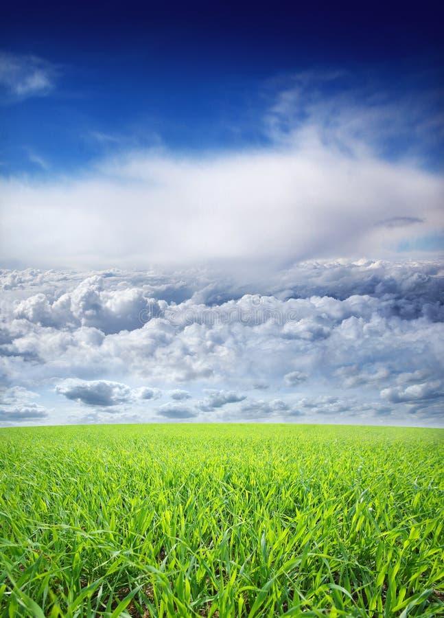 Download Piękny Natury Tło Z Niebem I Trawą Obraz Stock - Obraz złożonej z świeżość, farm: 28964763