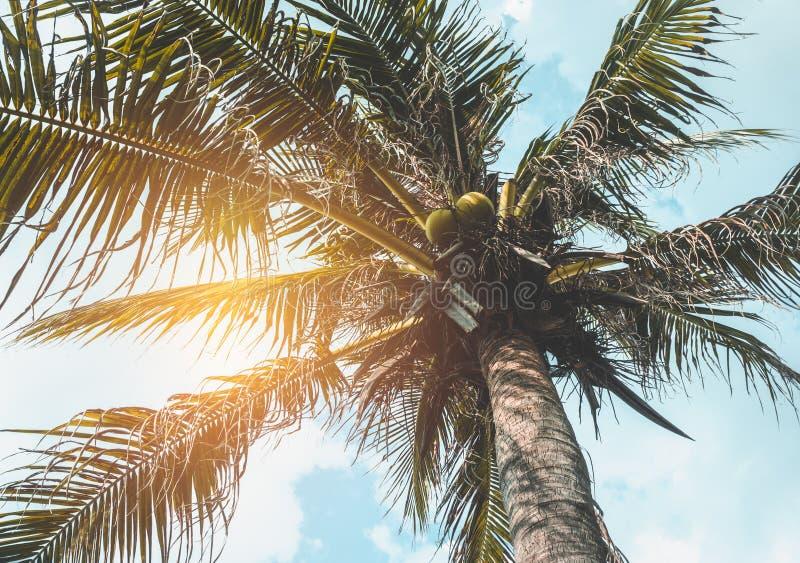 Piękny niebieskiego nieba i słońca ` s promienia jaśnienie za kokosowymi palmami obrazy royalty free