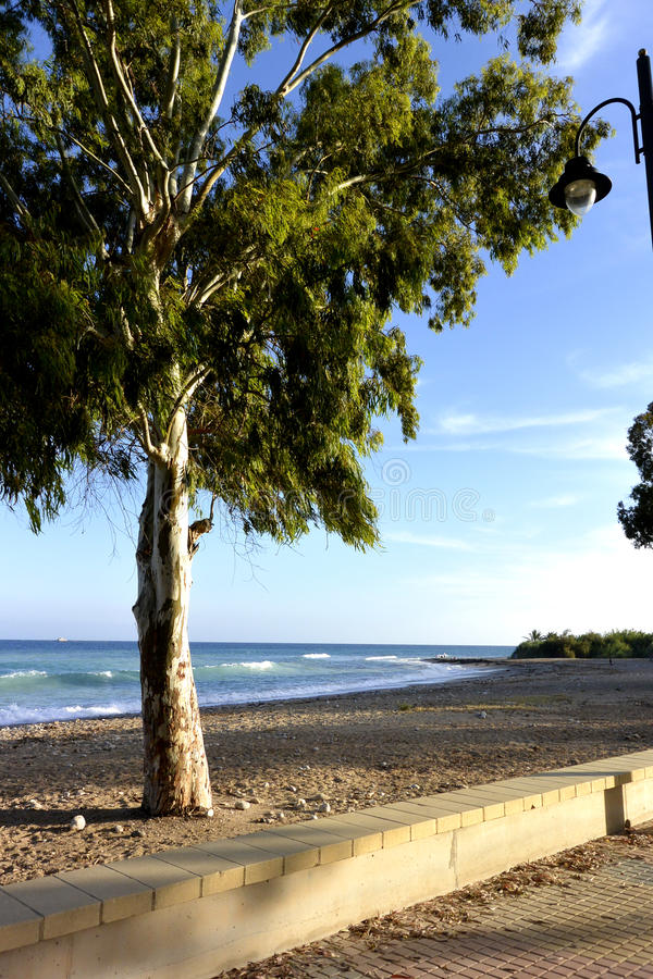 Piękny niebo z biel chmurami i osamotnionym drzewem na plaży hiszpański wybrzeże obrazy stock