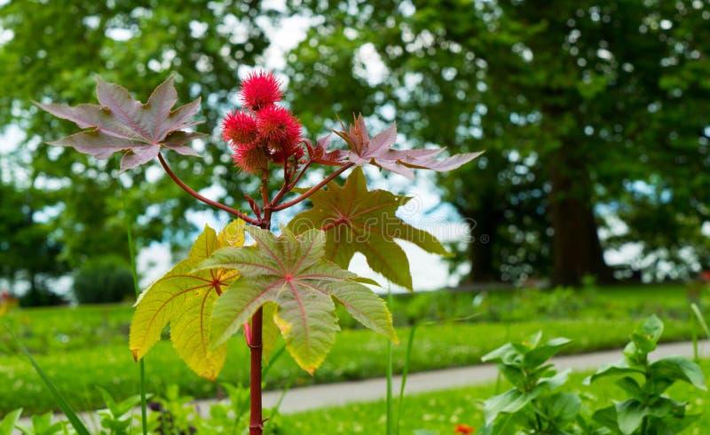 Piękny niezwykły kwiatu zakończenie obrazy royalty free