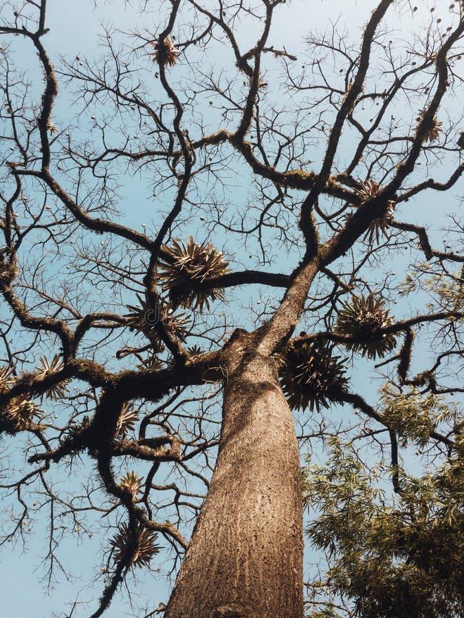 Piękny niskiego kąta strzał drzewo z długimi curvy gałąź i jasny niebieskie niebo w tle zdjęcia royalty free