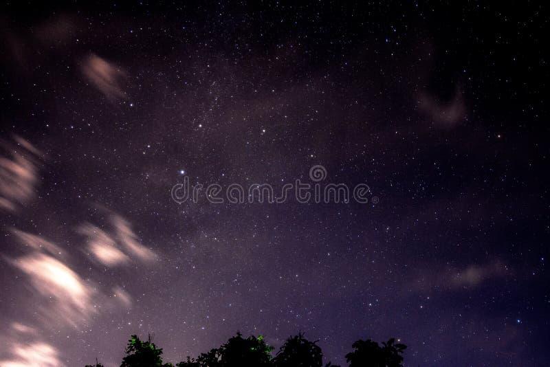 Piękny nocne niebo i wiele gwiazdy z drzewnymi liśćmi zdjęcie stock